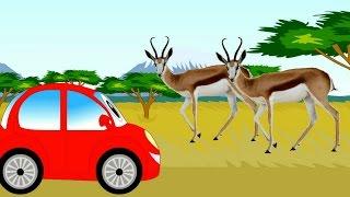 Мультик про машинку. Машинка Бодя в Африке. Изучаем животных Африки