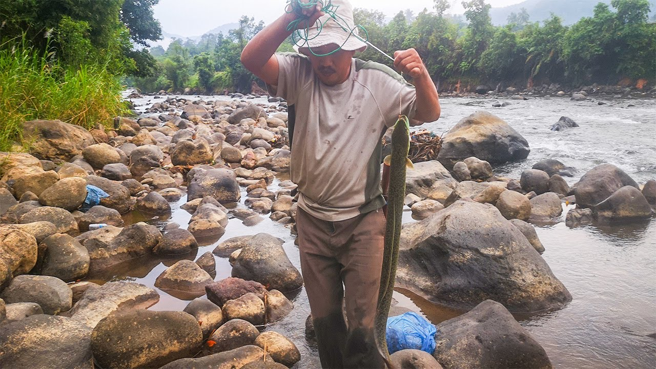 Tradisional : Menangkap Belut sungai Deras   berburu Belut