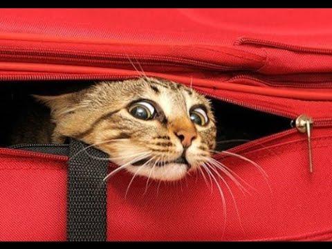Картинки по запросу смешные картинки про котов до слез