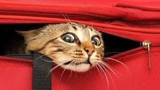 Смешные кошки 1 ● Приколы с животными лето 2014 ● Funny cats vine compilation ● Part 1