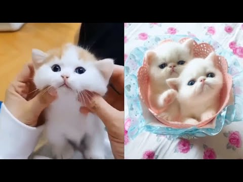 Cute and Funny Baby Cat Videos #1   Best dank cat memes compilation of 2020
