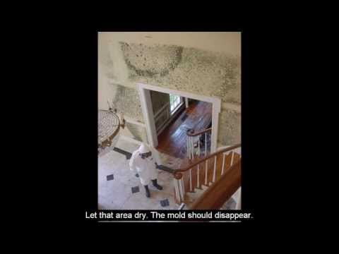 Mold Remediation Cost - Home Mold Remediation Low Cost Diy Home Repair & Fungus Removal Tips