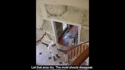 Mold Remediation Cost Home Low Diy Repair Fungus Removal Tips
