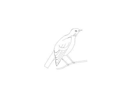 Как нарисовать дрозда поэтапно