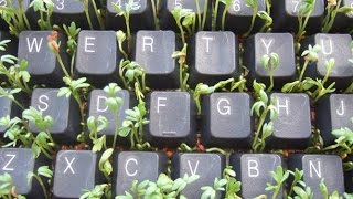 видео Выращивание картофеля из семян рассадным способом.