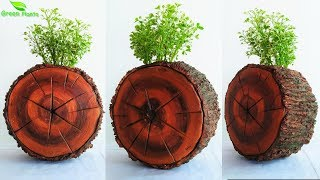 Creative Wooden Slice Cement Planter | Tree Stump Piece Planter | Cement Planter Idea//GREEN PLANTS