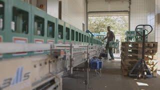 German companies urge authorities to grant asylum to migrant w…
