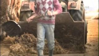 Kako da napravite najeftniju a modernu stalu za krave i da ne uselite junice