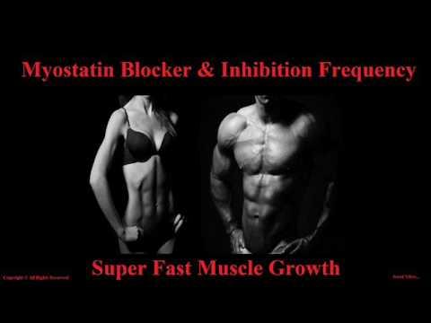 Extreme Body Building Frequency - Myostatin Inhibitor ...