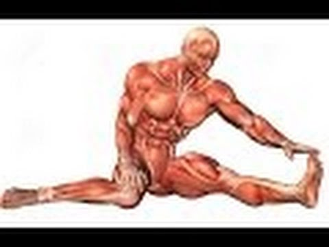 Anatomy And Physiology Of Muscular System Youtube