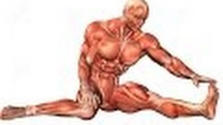 Anatomy and Physiology of Muscular System