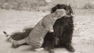Самые смешные животные Приколы с котами и собаками 2021 13