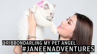 Meet My Pet Persian Cat Ribbon Darling! | Janeena Chan