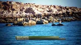 ROOSTERFISH LA PAZ, MEXICO - Seasons on the Fly and The Baja Pirates