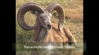 Красная книга Казахстана (млекопитающиеся).