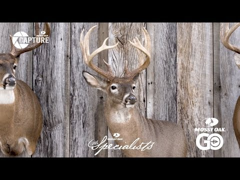 Ben Mears • Whitetail Deer Taxidermy