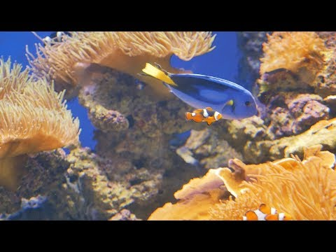 छोटी-छोटी प्यारी मछलियां.Cute Small Fishes in Aquarium Fish Tank at SEA Aquarium Singapore