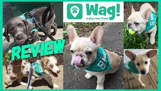 Wag Dog Walking Review - Wag App Review Dog walking commercial, wag...