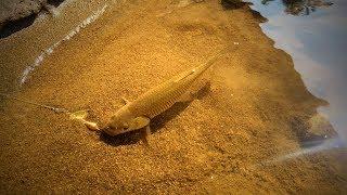 Chub Fishing Action  Kasna Avı Bol Aksiyon ✔️