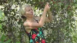видео Вишневый сок: польза и свойства сока вишни