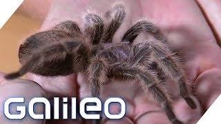 Angst vor Spinnen besiegen: Selbstversuch | Galileo | ProSieben
