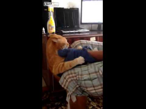 #Cat Angry Kitty/Cat Attack the kid