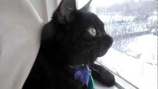 Cat and raven conversation