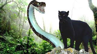 Los 10 animales mas peligrosos del  Amazonas.