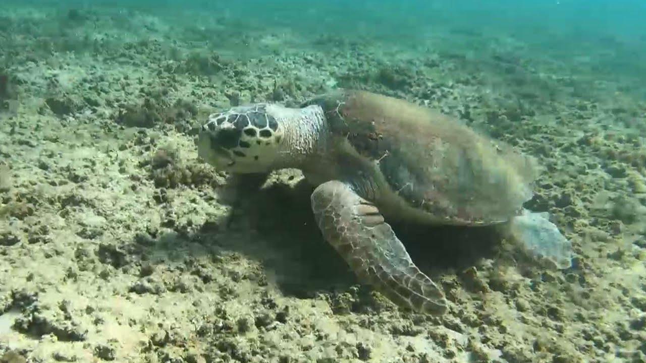 מרינה חדשה או שמורת טבע ימית?