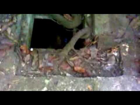 Gua-gua Peninggalan Zaman Penjajahan Di Cagar Alam Pantai Pangandaran Jawa Barat Indonesia