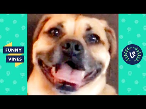 TRY NOT TO LAUGH - Cutest Funny Animal Videos You Must Watch!