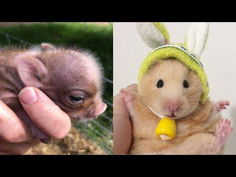 ПРИКОЛЫ С ХОМЯЧКАМИ . (СМЕШНОЕ ВИДЕО) Hamsters like #294 funny video about animals