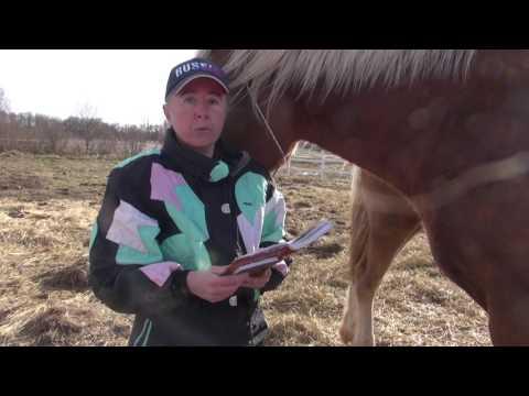 Вопрос: А как подзывают коней?