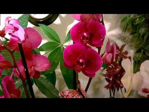 Орхидные — Википедия