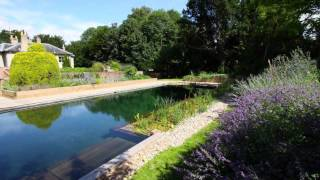 Natural Swimming Pools Benefit Your Backyard