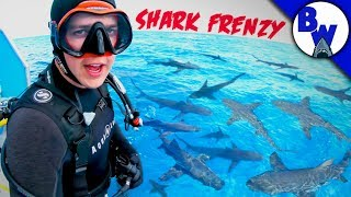 DIVING into a SHARK FRENZY!