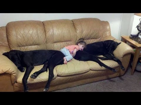Dogs Meeting Babies for the First Time Compilation 2017