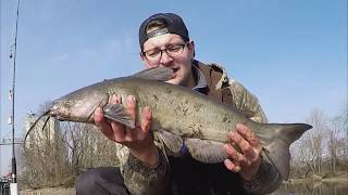 How to Catch Fall & Winter Channel Catfish From Bank Using Gizzard Shad | KastKing