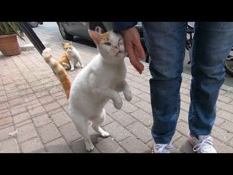 Orange and white cat says, thank you for food and love