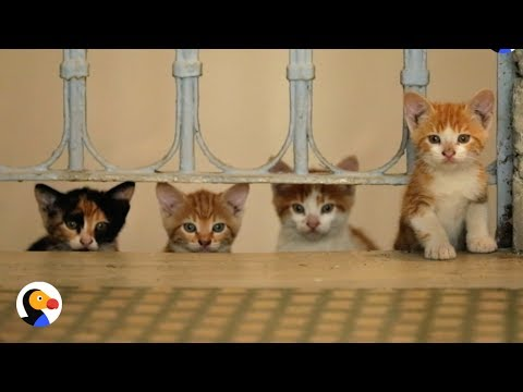 Kedi Documentary: Street Cats Of Istanbul | The Dodo