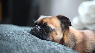 Psy i szczenięta śpiące Muzyka - Wpływ snu