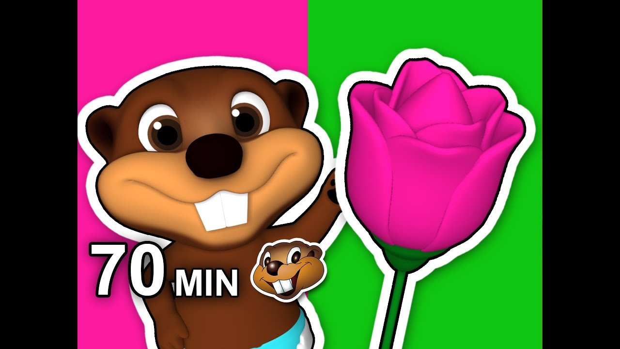 Pink flower song plus more 70 min compilation learn colors with pink flower song plus more 70 min compilation learn colors with busy beavers teach toddlers youtube mightylinksfo