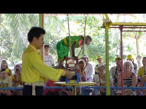 Vietnam- Nha Trang- Monkey Island - Monkey Circus Show HD