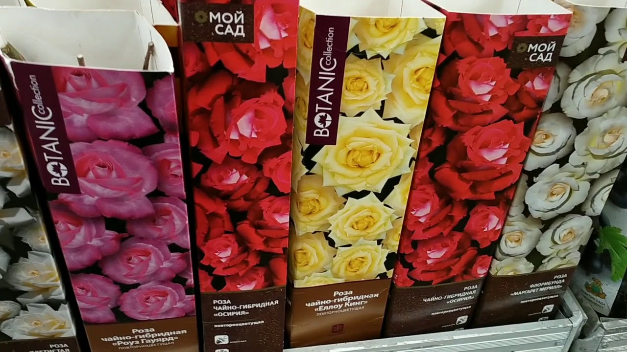 Магазин Оби. Март 2021. Розы, пионы, лилии, лилейники