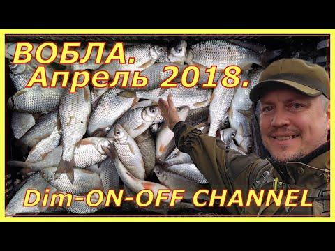 Вобла 2018. Володарский район. Апрель.