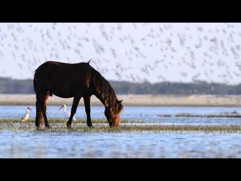Sea Horses Trailer on Vimeo