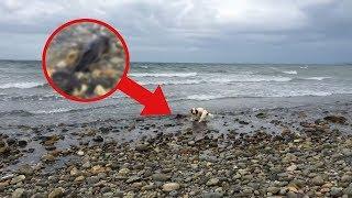 Hund findet etwas Seltsames am Strand. Dann sieht es der Besitzer...