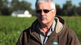 Video Cover crop/Fertlizer Experiment in Dillon County download MP3, 3GP, MP4, WEBM, AVI, FLV November 2017
