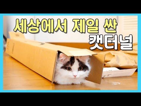 세상에서 제일 싼 캣터널! 고양이는 상자를 좋아해!