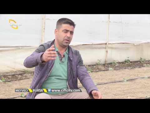 Meyveci - Kabak Yetiştiriciliği Hakkında Genel Bilgiler / Bursa